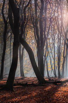 Sunrays in het Speulderbos van Midi010 Fotografie