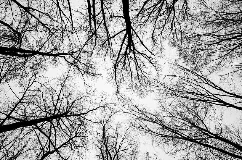Blick in die Baumkronen von Fartifos