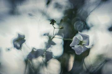 Blau von Wolbert Erich