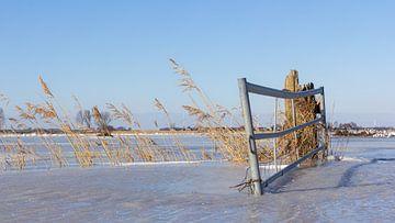 Een landhek in een laag ijs van JWB Fotografie