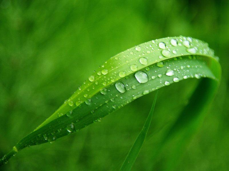 Regentropfen im Grün van Ilona Montag