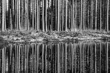 Woud reflecties van Jan Brons