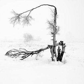 Windschäden von Guy Lambrechts