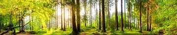 Idyllisch bos bij zonsopgang van Günter Albers