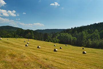 Heuwiese im Bayerischen Wald von Jörg Hausmann