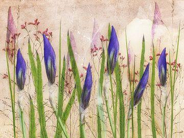 iris, blume, lila, blumenarrangement von Klaartje Majoor