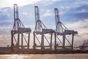Containerkranen Rotterdam