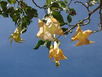 Balinese flowers van Annie Lausberg-Pater