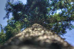 Tree High