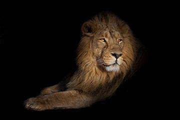 leeuwenportret op een zwarte achtergrond. leeuwen op een zwarte achtergrond. Een krachtig leeuwenman van Michael Semenov