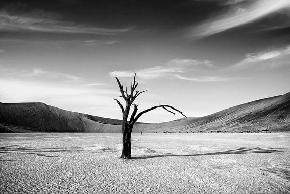 Dode Camelthorn bomen tegen rode duinen en blauwe hemel in Deadvlei, Sossusvlei.