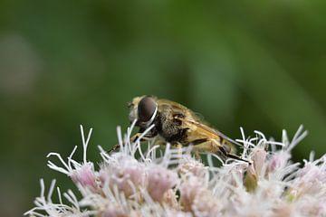 Bienen und Blumen von Daphne van der straaten