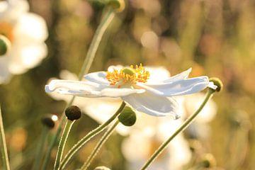 Bloemen in ochtendzon van Janine van Lagen