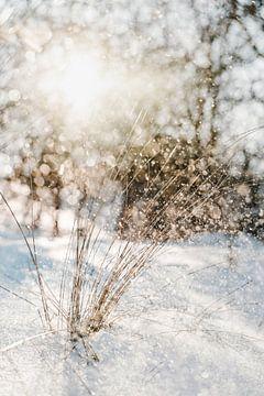 Sneeuw in de duinen, glinsteringen door tegenlicht van Melissa Peltenburg