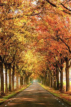 Rozenvendreef in prachtige herfstkleuren