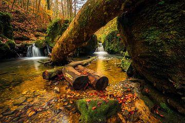 Flora's secret von Joris Pannemans - Loris Photography