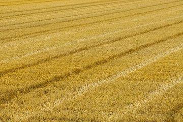 Gemähtes Getreide von Niek Traas