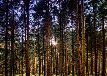 Kaapse Bos 3 van Henk Leijen