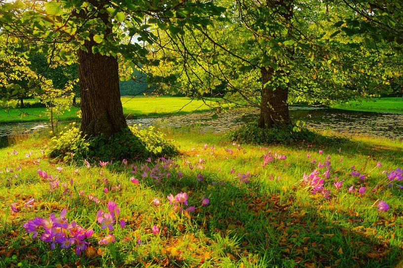 Herfsttijloos en lindes van Michel van Kooten