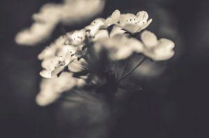 Blumen in Schwarz-Weiß-Kunstfotografie