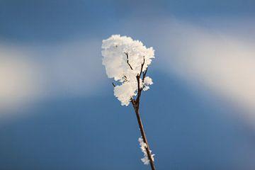 Winter Snow van Johnny van der Leelie
