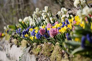 Bloemenperk in de lente
