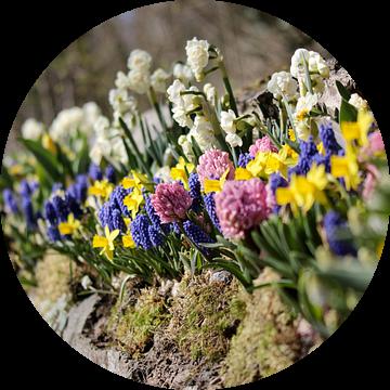 Bloemenperk in de lente van Niels van den Berg