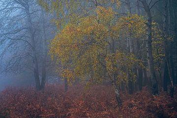 Sfeervolle herfst op de Veluwe van Sander Grefte