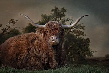 Schottischer Highlander von Lisette van Peenen