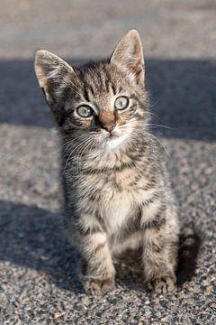 Jonge kitten op een boerderij van