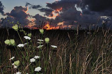 Zonsondergang met bloemen / Sunset with flowers