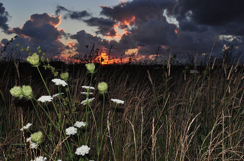 Zonsondergang met bloemen / Sunset with flowers van Henk de Boer