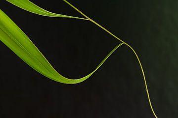 Neues Blatt einer Palmenpflanze von Jefra Creations