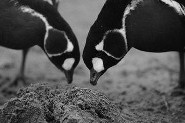 Vogel Liefde van Ima Rhebok