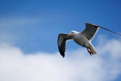 Seagull van