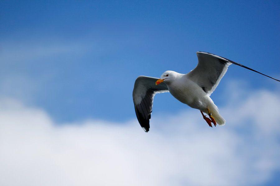 Seagull van Erwin Verweij