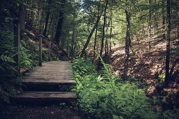 Brücke über einen Bach im Wald von Suzanne Schoepe