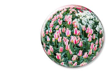 Kristallkugel mit rot-weiß und weiße Tulpen im Keukenhof Niederlande von Ben Schonewille