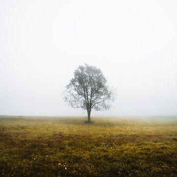 Einsamer Baum an einem nebligen Herbstmorgen von Patrik Lovrin