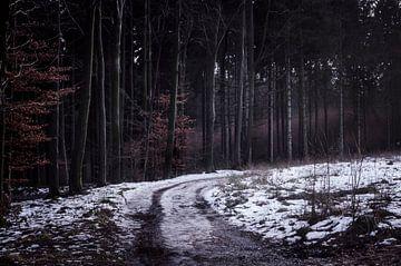 Het onbekende pad van AnyTiff (Tiffany Peters)
