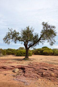 Eenzame boom van Bert van Emmerloot