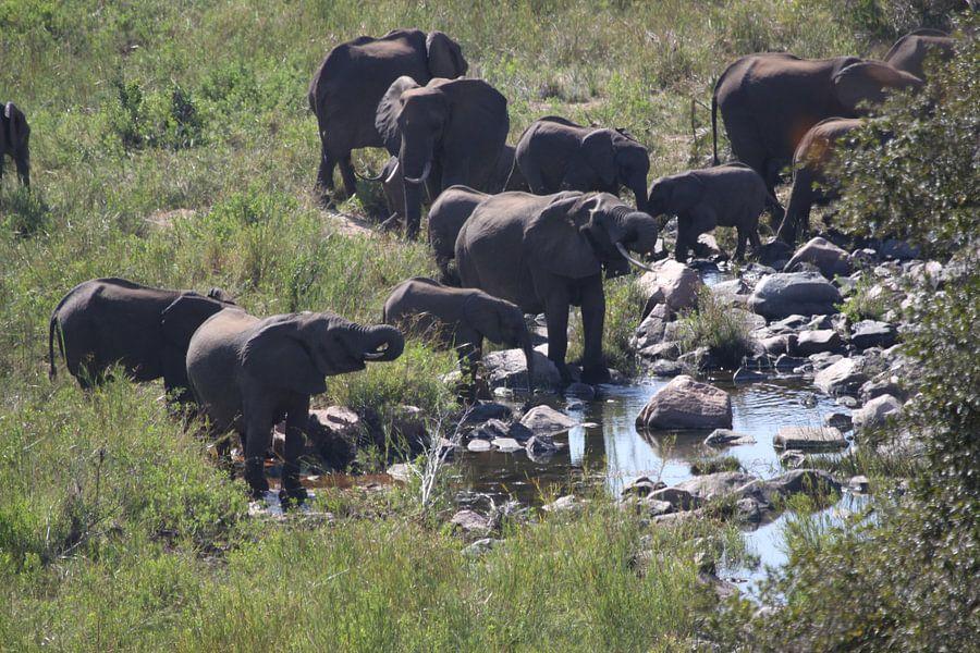 olifanten groep van Jeroen Meeuwsen