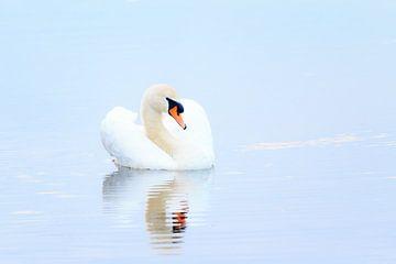 Blauwe zwaan von Dennis van de Water