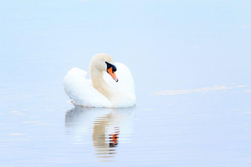 Blauwe zwaan van Dennis van de Water