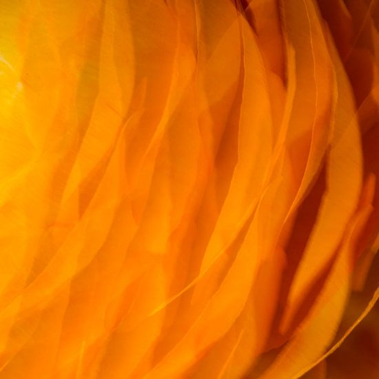 Oranje 2 van Jose Gieskes