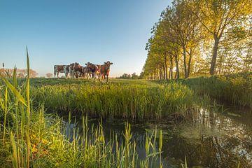Kühe am Graben von Moetwil en van Dijk - Fotografie
