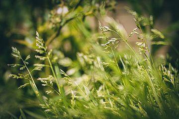 Vert comme l'herbe sur Daphne Groeneveld