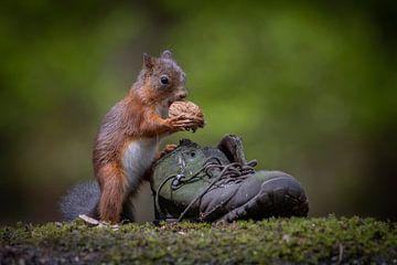 Das Eichhörnchen und der Schuh von Eddie Anthonisse