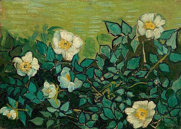 Vincent van Gogh, Wild roses