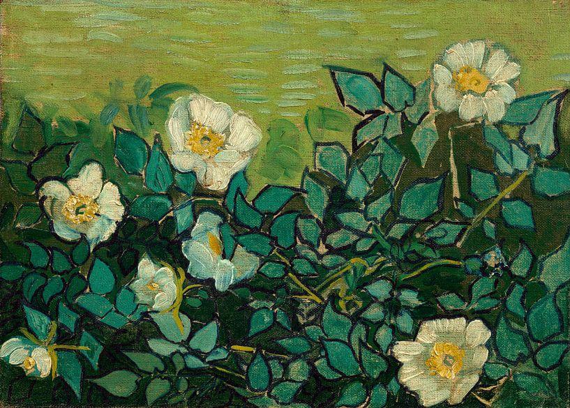 Vincent van Gogh, Wilde rozen van 1000 Schilderijen